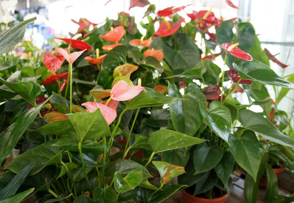 Plantas de interior flores castillon - Ver plantas de interior ...