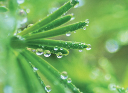 centrodejardineria)fitosanitarios