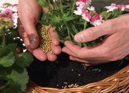 ecologicos)fertilizantes