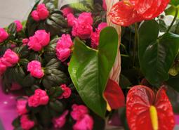 floristeria)celebraciones)plantas