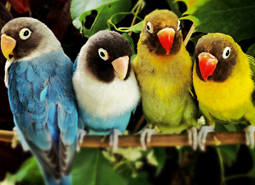mascotas)aves