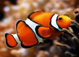mascotas)peces