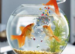 Mascotas flores castillon for Productos para estanques de peces