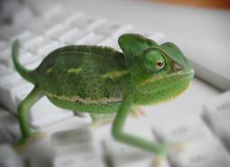 mascotas-reptiles