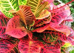 centrodejardineria)plantasinterior