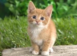mascotas)gatos
