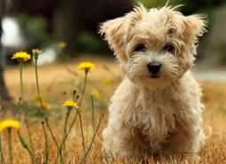 mascotas)perros