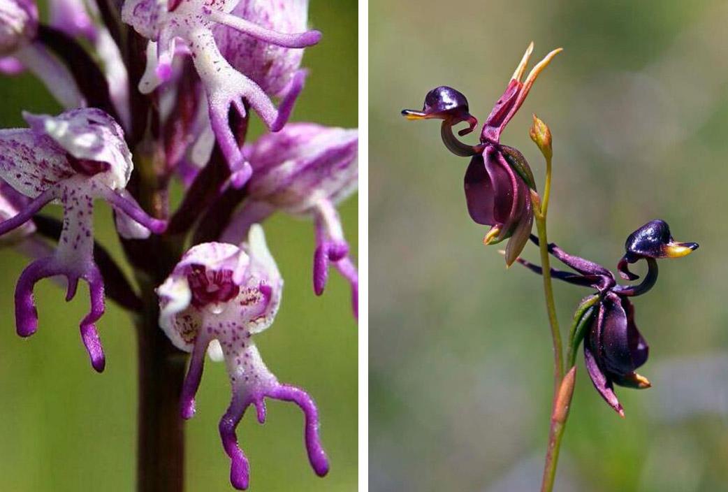 curiosidad-orquidea2