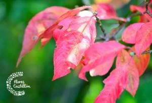 plantas resistentes clima frio