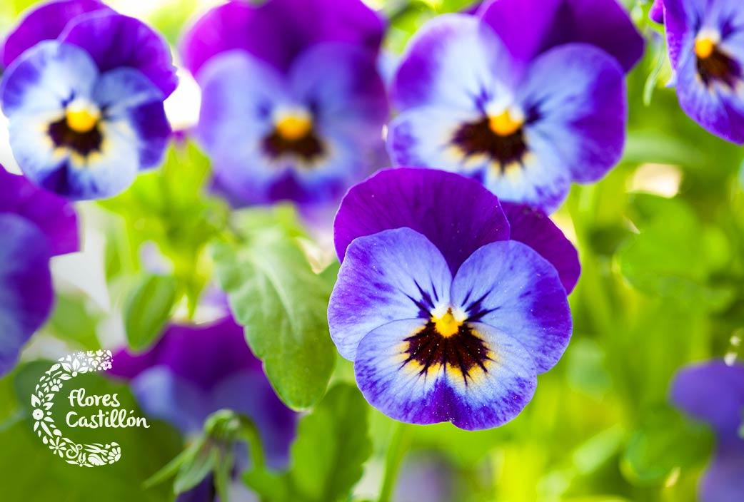 flores resistentes al frio