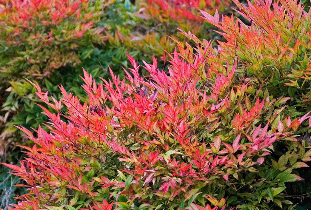Plantas para clima frio flores castillon for Arbustos de exterior resistentes