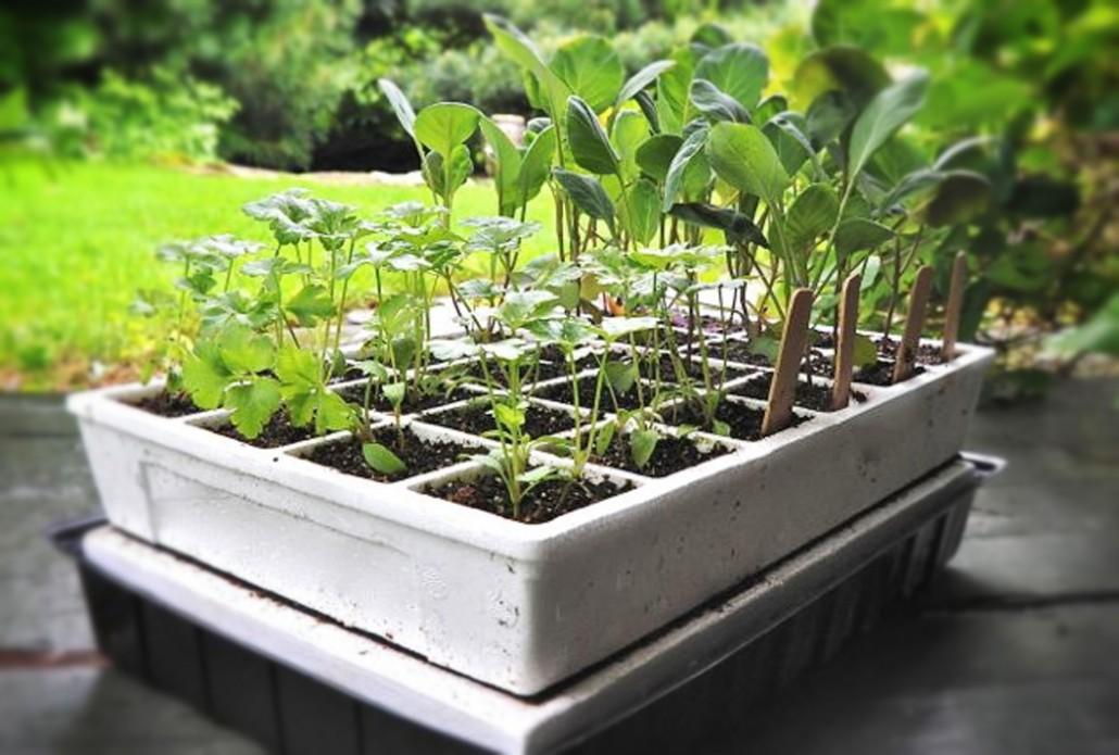 Haz tu propio semillero flores castillon for Plantas para invernadero