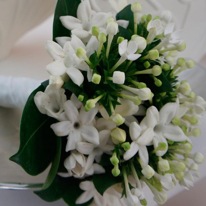 boda boubardia