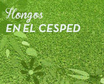 Los hongos en el c sped flores castillon for Hongos en el jardin