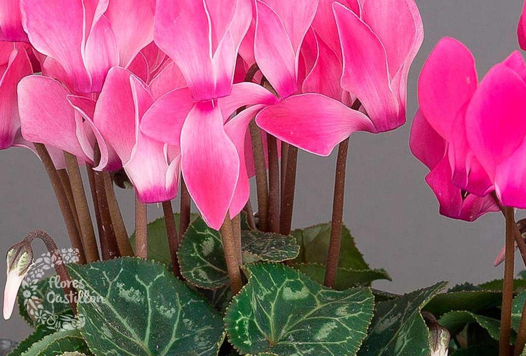 Tareas para el mes de septiembre flores castillon - Plantas de temporada primavera ...