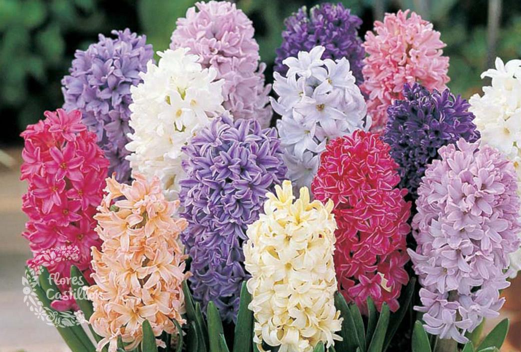 Bulbos de oto o flores castillon - Bulbos de otono ...