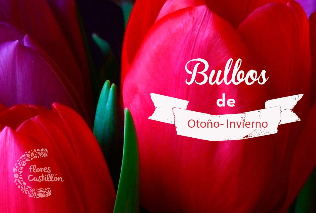 bulbos5
