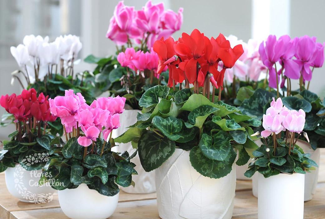 Colores para parar el fr o flores castillon for Adornos para plantas con llantas