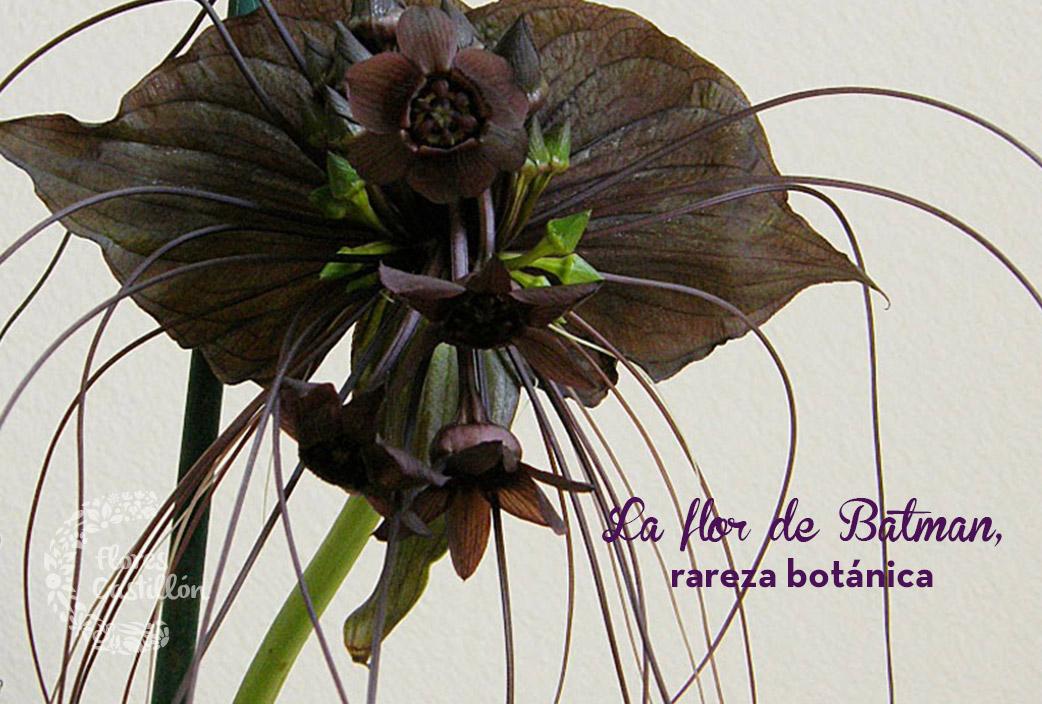 rareza-botanica