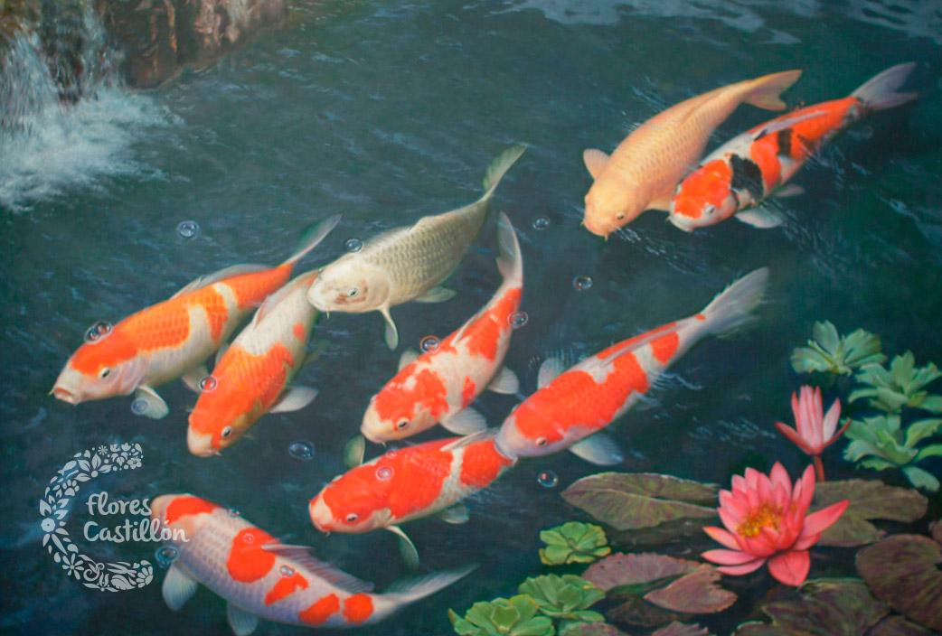 Peces de agua fr a flores castillon for Estanque carpas koi