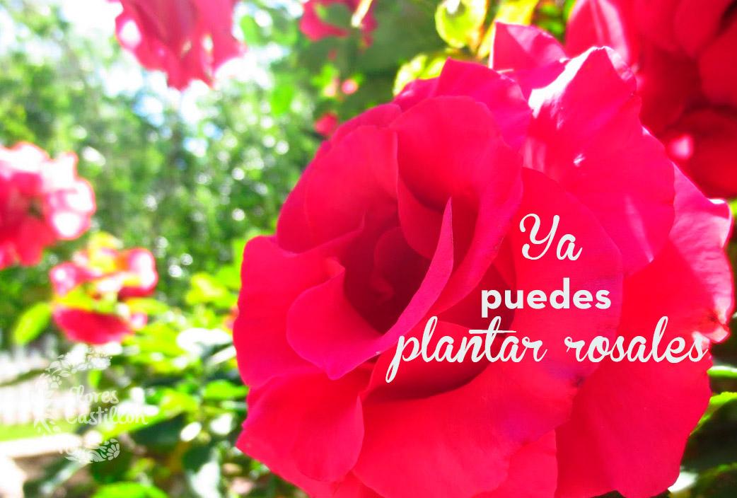 rosales1