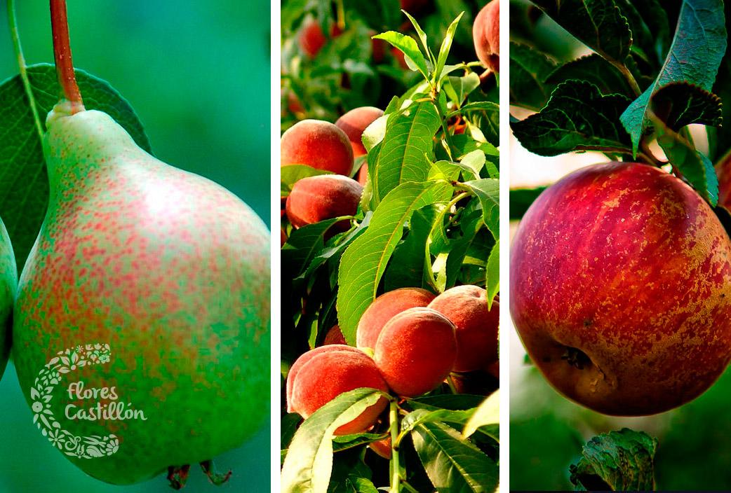 frutales-varios