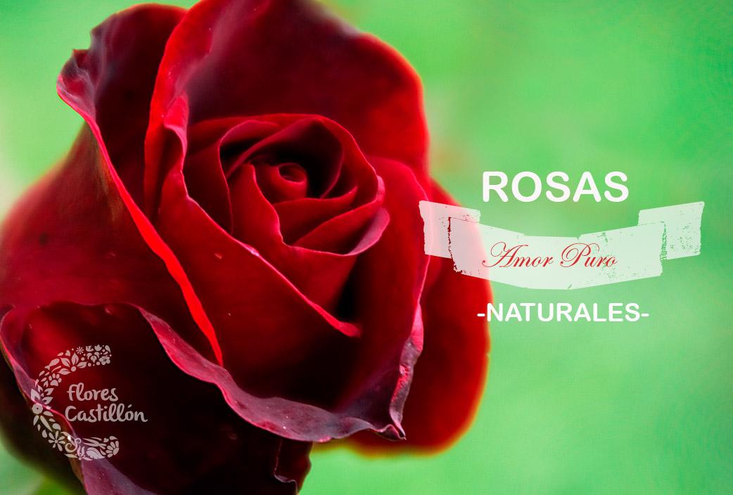 rosas-naturales