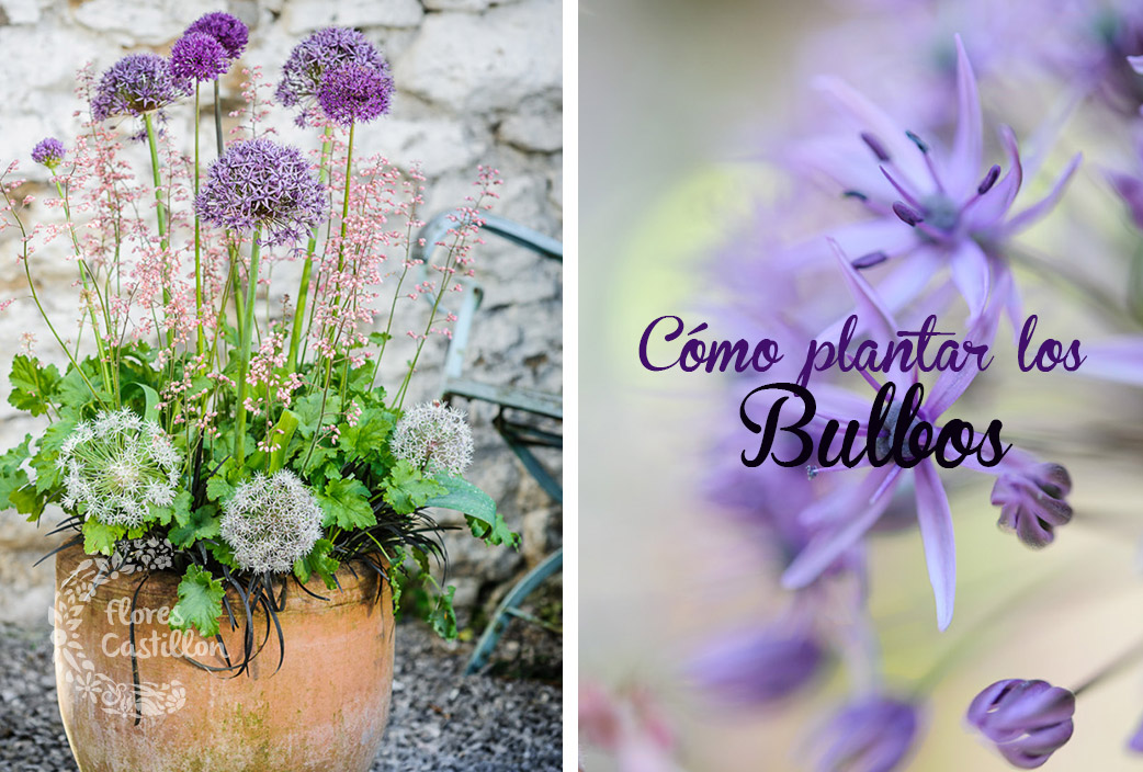 C mo plantar los bulbos flores castillon - Bulbos de otono ...