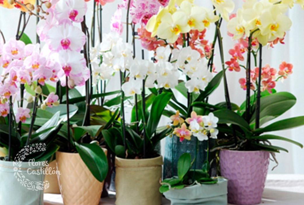 Larga vida a tus orqu deas flores castillon - Tiestos para orquideas ...
