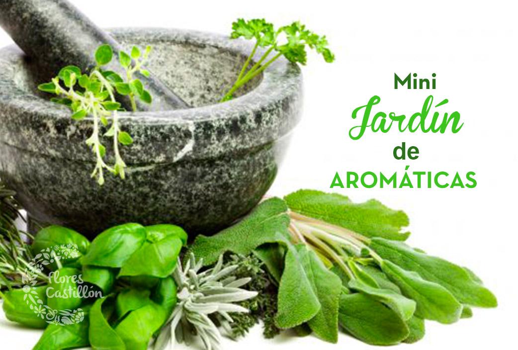 Mini jard n de arom ticas flores castillon - Jardin de aromaticas ...