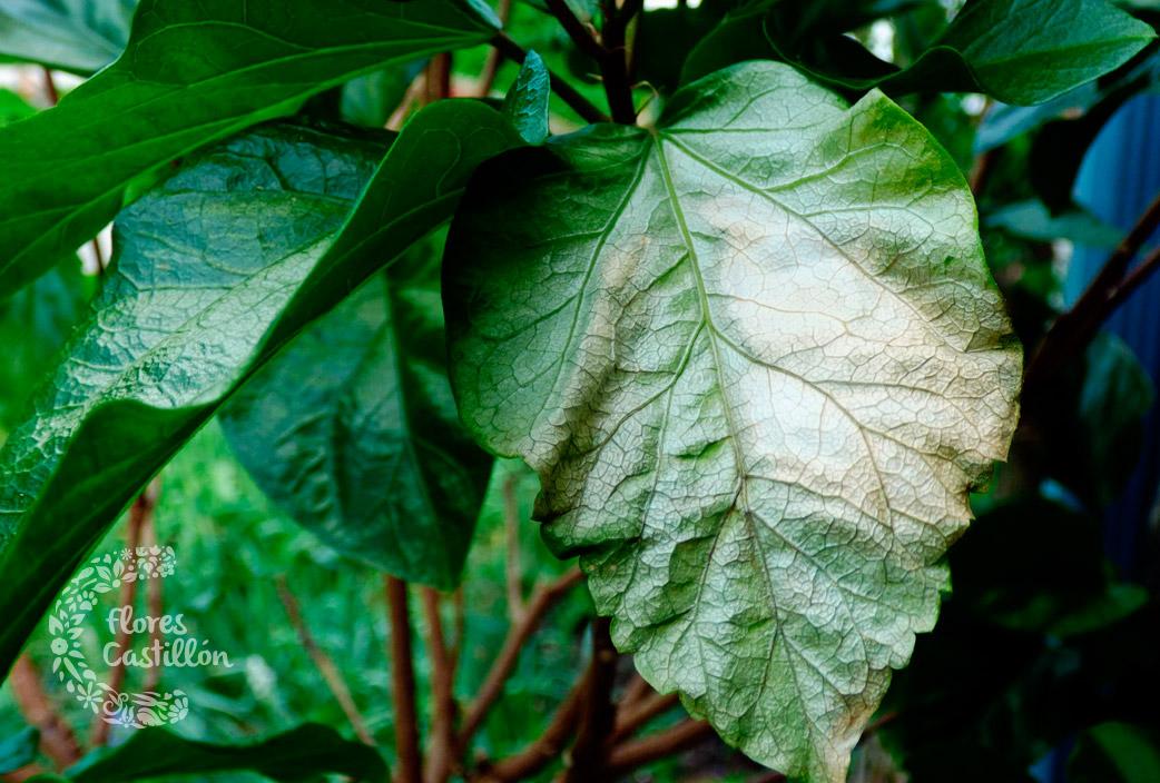 hojas-secas-por-el-sol3