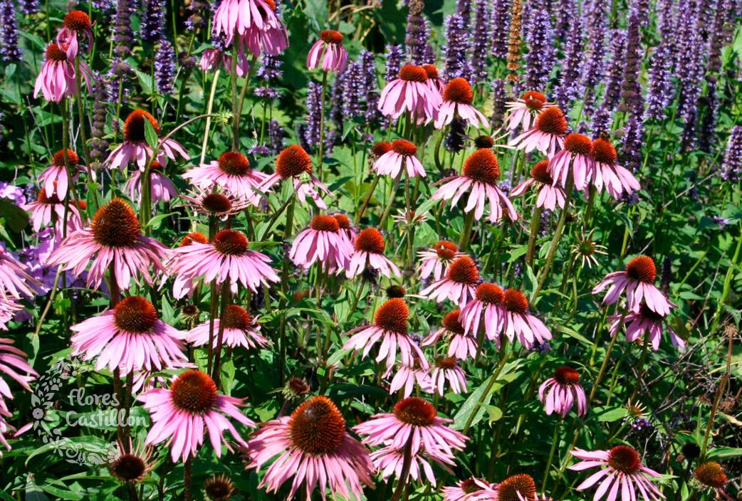 plantas-herbáceas2