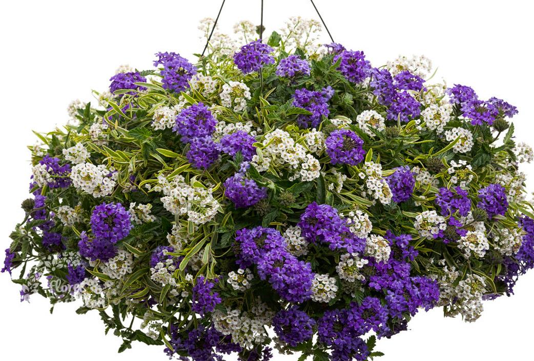 Color para desaf ar al calor flores castillon - Jardineras de colores ...