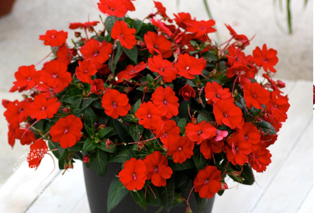 Plantas colgantes exterior sol plantas para terrazas - Plantas colgantes de exterior ...