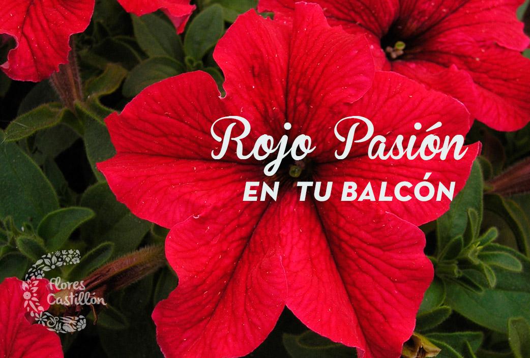 rojo-pasion-en-tu-balcon