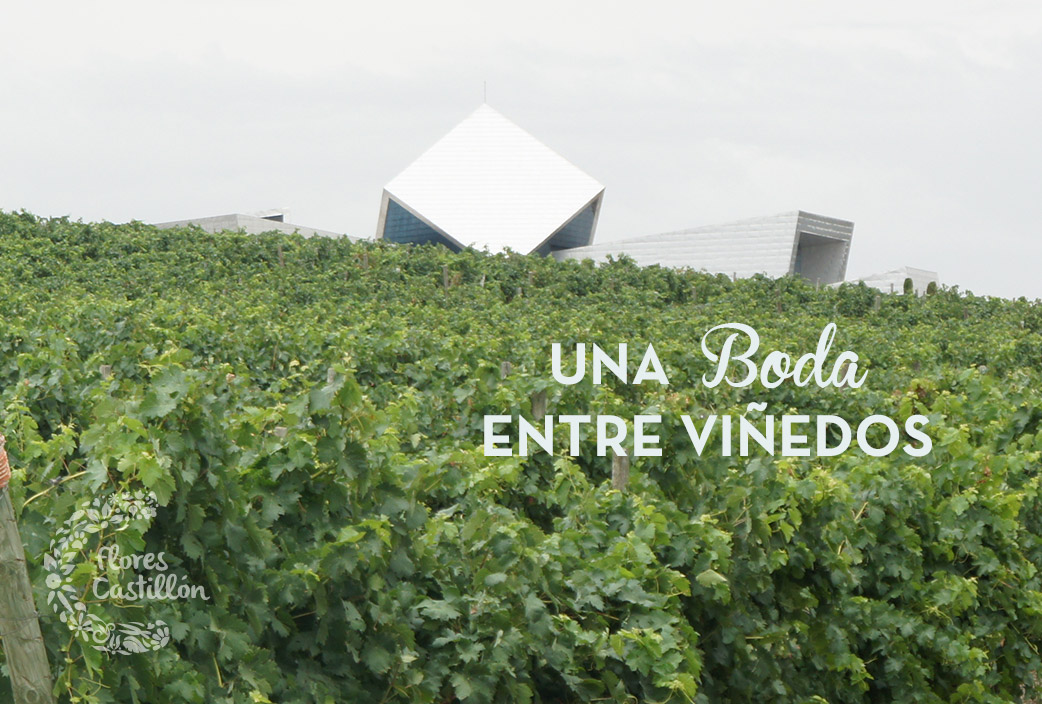 viñedos