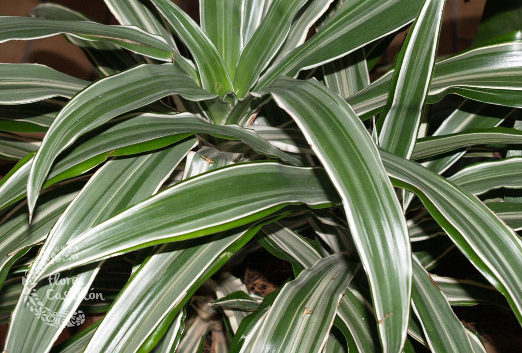 planta con sus hojas largas blse