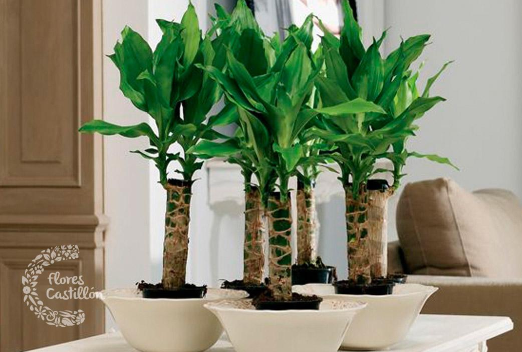 Troncos las plantas de enero flores castillon for Arbol interior