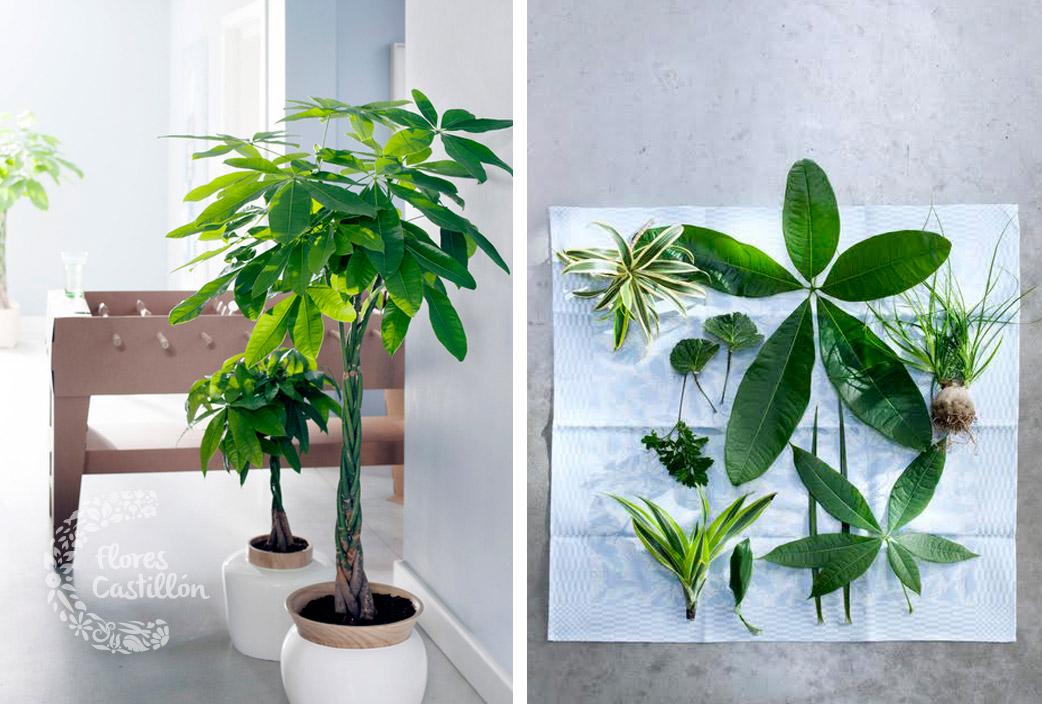 Troncos las plantas de enero flores castillon - Arboles de interior ...