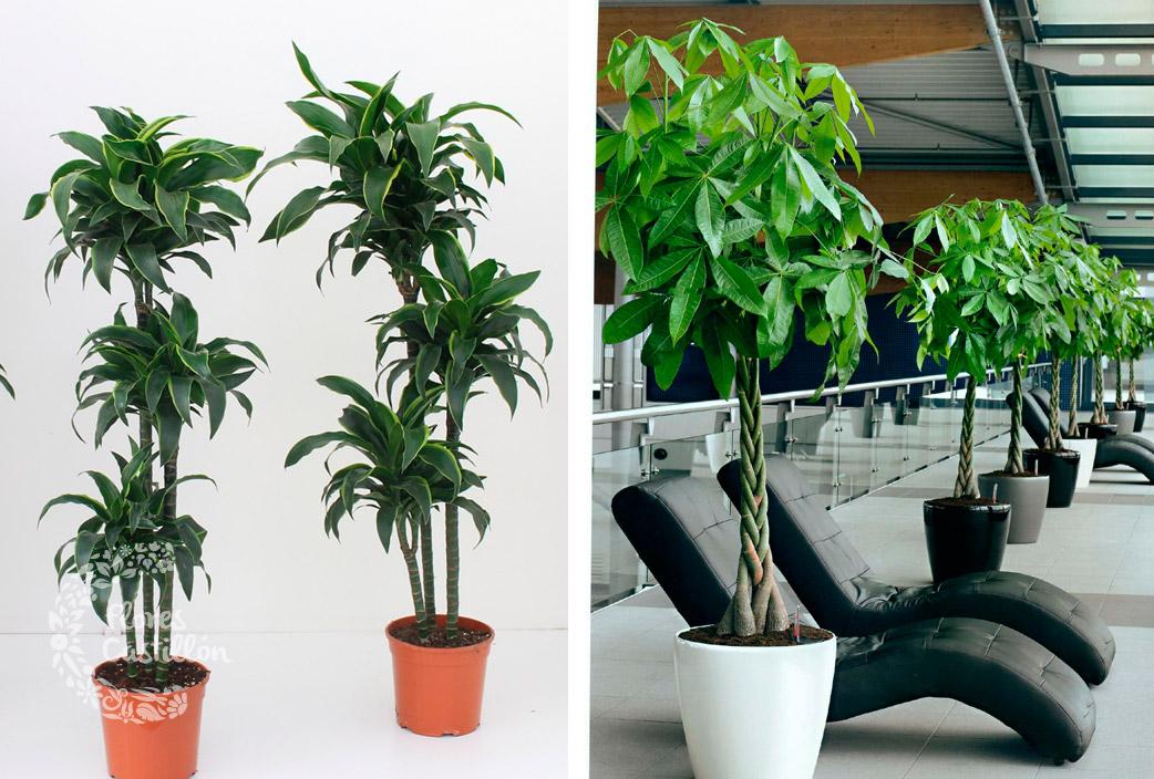 Troncos Las Plantas De Enero Flores Castillon - Troncos-de-arboles-decorativos