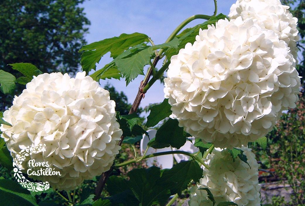 post-flores-2