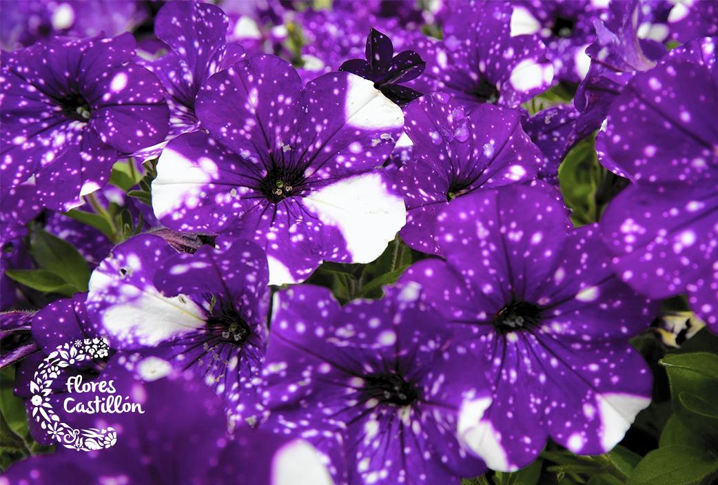 post-flores-4