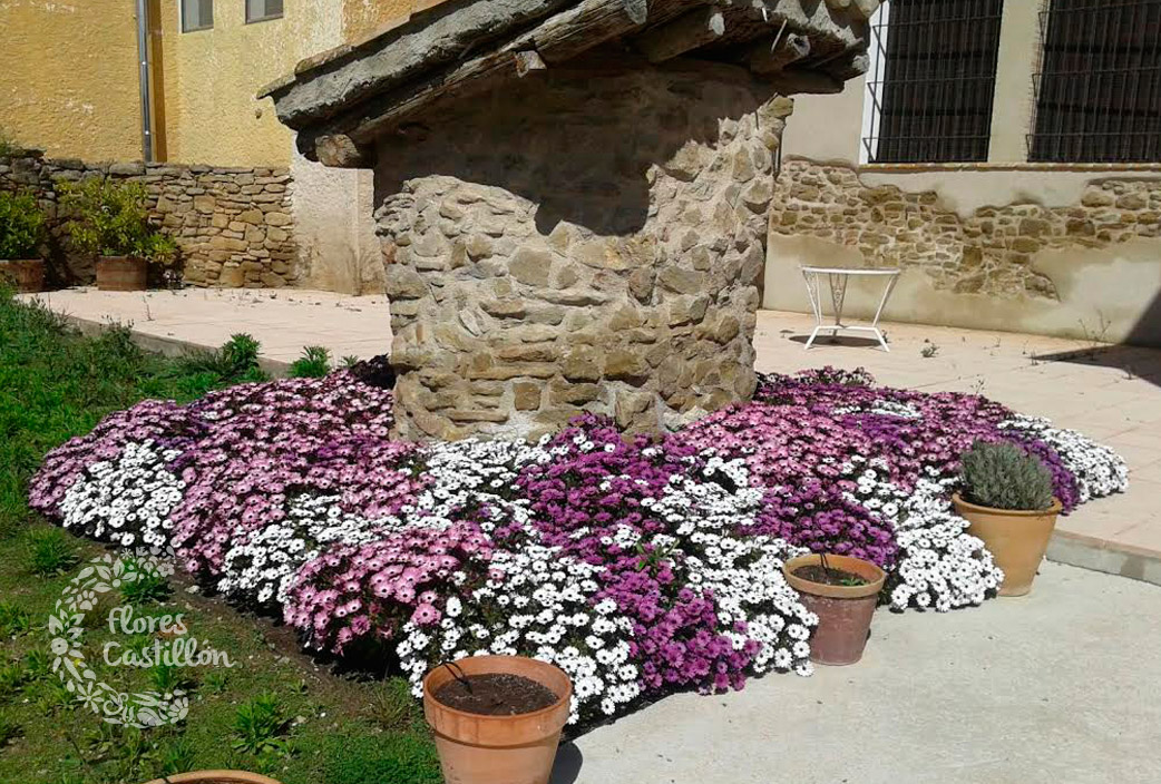 Plantas que florecen en primavera flores castillon for Jardines de primavera
