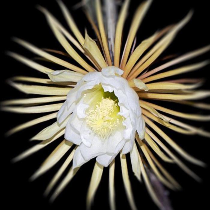 Conoces Los Tipos De Flores Nocturnas