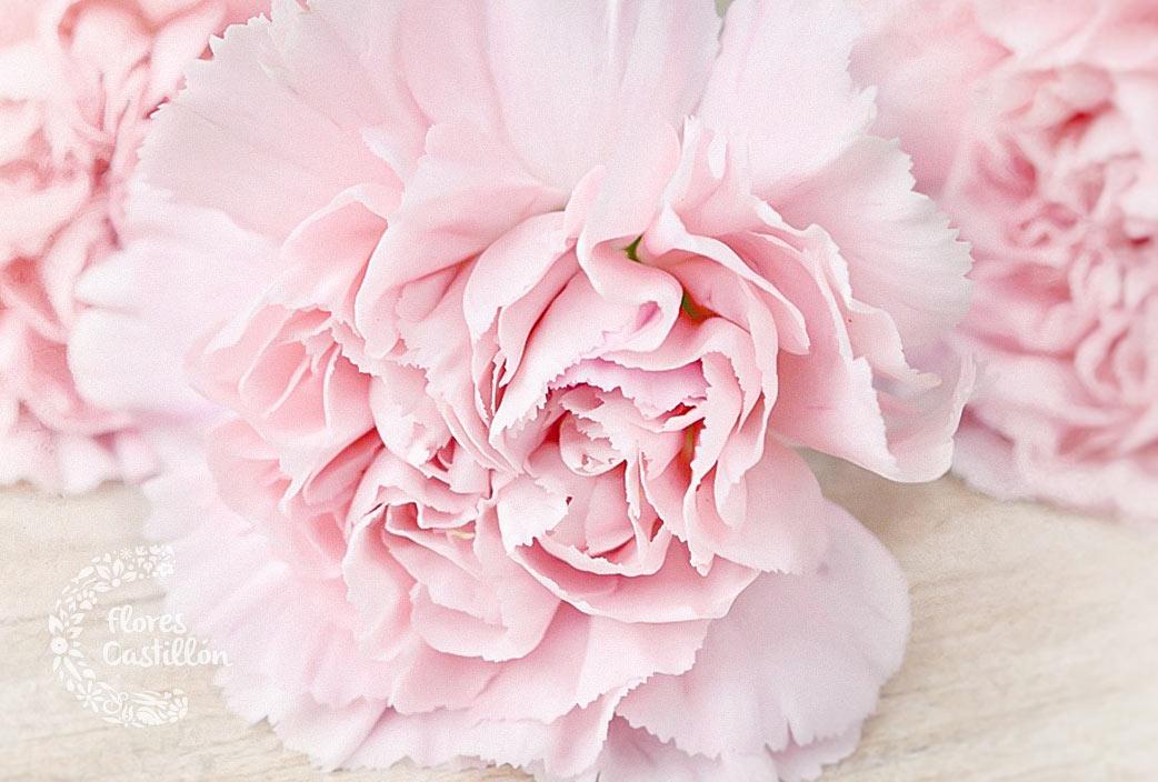 flor-clavel-todos-los-santos