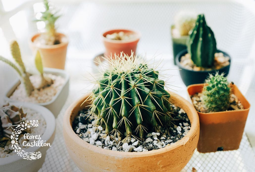inspiracion decoracion con cactus
