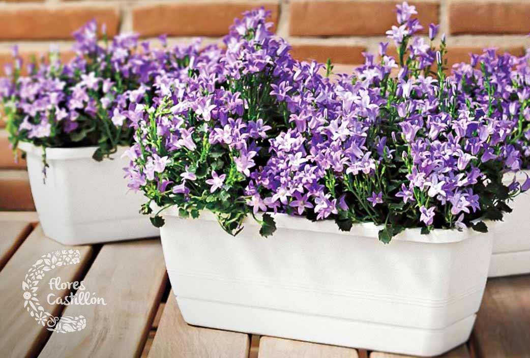 Jardineras-colgantes-y-maceteros3