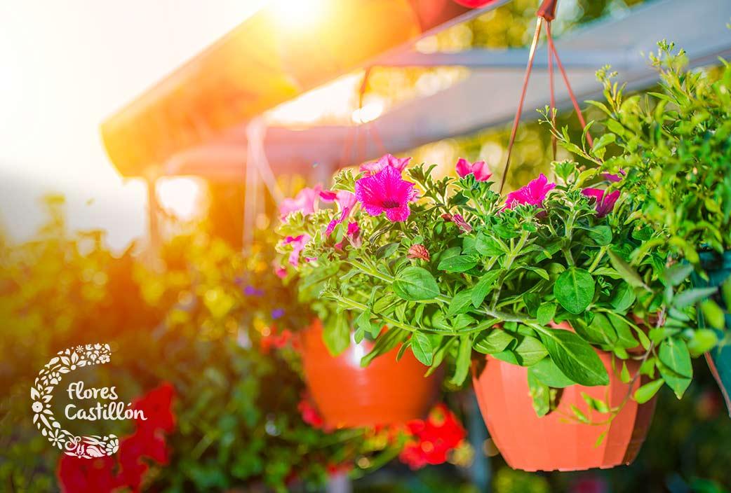 seleccion de maceteros y jardineras colgantes