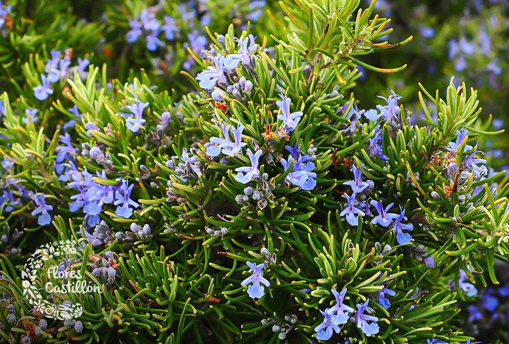 Qu plantar en mi finca o jard n en oto o flores castillon for Jardin que planter en janvier