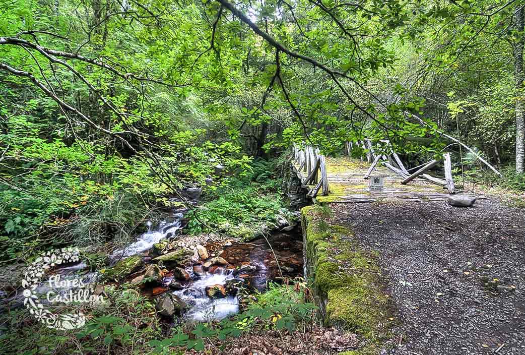 Bosque-Muniellos visitar otoño